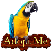 Adopt a Blue and Gold Macaw
