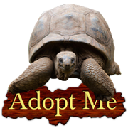 Adopt a Russian Tortoise