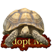 Adopt a African Spurred Tortoise