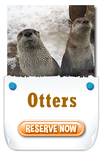 Close Encounters - Otters