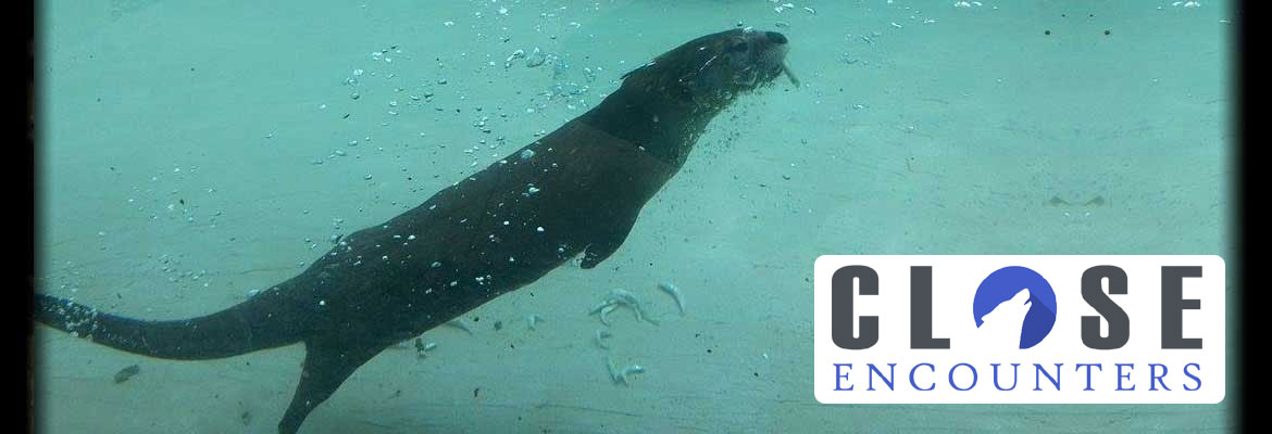 Close Encounter with the Otters at the Menominee Park Zoo